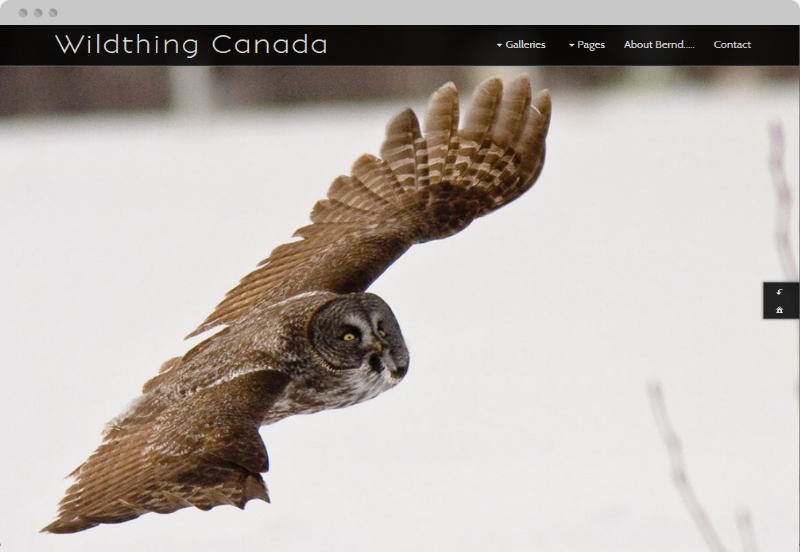 Redframe Photography Websites Client Example - Wildthing Canada
